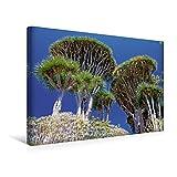 Premium Textil-Leinwand 45 cm x 30 cm quer, Drachenbäume | Wandbild, Bild auf Keilrahmen, Fertigbild auf echter Leinwand, Leinwanddruck (CALVENDO Natur)
