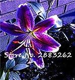Vista 100 stücke Lilie Blumensamen, Schöne Blume Lilium Lily Pflanzen Zwiebeln, schwachen Geruch, Indoor Bonsai Topfpflanze Für Hausgarten 16