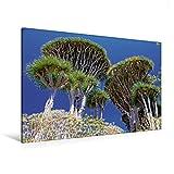 Premium Textil-Leinwand 120 cm x 80 cm quer, Drachenbäume | Wandbild, Bild auf Keilrahmen, Fertigbild auf echter Leinwand, Leinwanddruck (CALVENDO Natur)