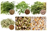2,6 kg BIO Keimsprossen Mischung -6 Sorten Mix- Keimsaat Samen für die Sprossenanzucht 250g Erbsen, 500 g Kichererbsen, 100 g Linsen, 250 g Alfalfa, 500 g Mungobohnen, 1 kg Weizen Sprossen Microgreen Mikrogrün