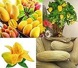 2x Mini Mango Zimmer Heirloom Obst Baum Zimmer Pflanze Garten kleinste Mango der Welt sehr süß #350