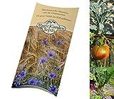 Saatgut Set: 'Alte Historische Gemüsesorten' 3 Sorten-Raritäten als Samen für die Anzucht in schöner Geschenk-Verpackung