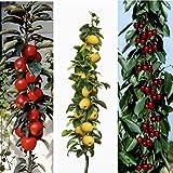 Dominik Blumen und Pflanzen, Obstpflanzen 3-er Set Säulenobst, Apfel, rotbäckchen, Kirsche Viktoria, Nashi jede 1 Stück, mehrfarbig