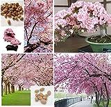 5x Riesen japanische Rosa Kirschblüten Sakura Baum frische Samen Garten Pflanze Bonsai Baum Zimmerpflanze Außen Pflanze #400