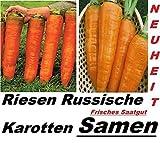 20x Riesen Russische Karotten Möhren Samen Neuheit Gemüse Garten #278