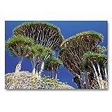 Premium Textil-Leinwand 90 x 60 cm Quer-Format Drachenbäume   Wandbild, HD-Bild auf Keilrahmen, Fertigbild auf hochwertigem Vlies, Leinwanddruck von Klaus Lielischkies