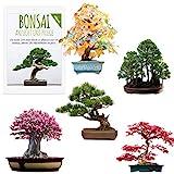 Außergewöhnliche Bonsai Samen mit hoher Keimrate - Pflanzen Samen Set für deinen eigenen Bonsai Baum (5er Set inkl. GRATIS eBook)