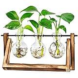 LESES Tisch Glasvasen, Luftpflanze Terrarium Zwiebel Glas Pflanzer mit Holz deko Propagationsstationen für Hydroponik Pflanzen Büro Hausgarten Dekor - 3 Zwiebel Vase