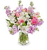Blumenstrauß Blütenmeer, Blumenversand, Levkojen, Rosen, Inkalilien, 70 Blüten, Pastellfarben, rosa, Schnittblumen, GRATIS Blumenvase, 7-Tage-Frischegarantie, versandkostenfrei bestellen