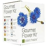 Plant Theatre Blumensamen für Essbare Blüten - Anzuchtset mit 6 Blumen Sorten für Indoor Garten, Balkonkasten - Geschenke für Frauen & Hobbygärtner