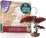 10 Bonsai Samen aus 5 Kontinenten I Exotische Baum Samen für deinen einzigartigen Bonsai Baum I Bonsai Starter Kit für Anfänger und Pflanzen Verrückte I Unser Bonsai Set als besondere Geschenkidee
