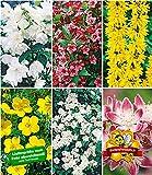 BALDUR-Garten 5 Meter Blüh-Hecken-Kollektion, Blütenhecke 6 Pflanzen Forsythie, Weigelie, Jasmin, Deutzie, Potentilla, Spirea