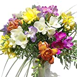 Blumenstrauß mit 20 bunten Freesien - Inklusive gratis Grußkarte