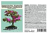 Seedeo Japanische Kamelie (Camelia japonica) Zimmer-Bonsai Rosablühend 8 Samen